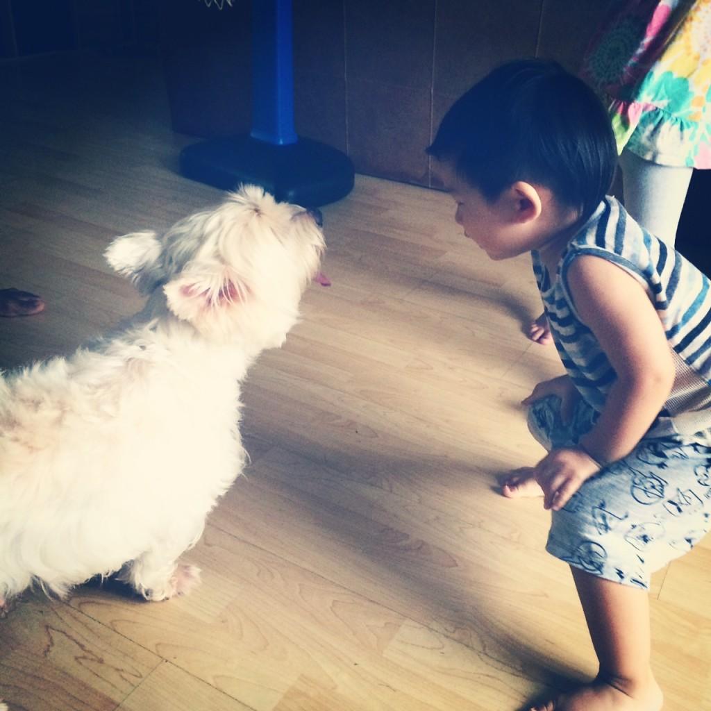 dog whispering